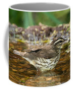 Northern Waterthrush Coffee Mug