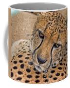 Not So Fast Coffee Mug