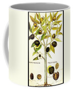 Nutmeg Plant Botanical Coffee Mug