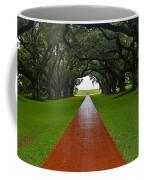 Oak Alley Path Coffee Mug