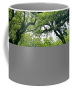 Oak Alley Trees Coffee Mug
