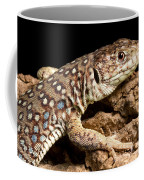Ocellated Lizard Timon Lepidus Coffee Mug