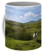 Okehampton Sheep  Coffee Mug