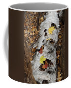 Old Fallen Birch Coffee Mug