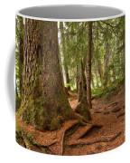 Old Growth Cedar At Cheakamus Lake Coffee Mug