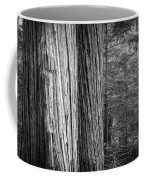 Old Growth Cedars Glacier National Park Bw Coffee Mug