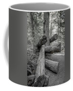 Old Growth Forest Black And White Collection 4 Coffee Mug