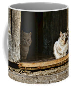Old Knox Church Cats Coffee Mug