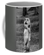 Old Man Gnome Coffee Mug