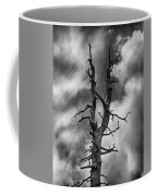 Old Trees Reach For The Sky Coffee Mug