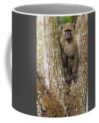 Olive Baboon Juvenile Kibale Np Uganda Coffee Mug