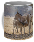 Onager Equus Hemionus 2 Coffee Mug