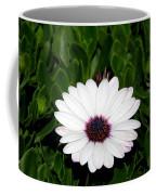 One Hit Wonder Gerbera Daisy Coffee Mug