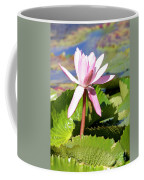 One Pink Water Lily Coffee Mug