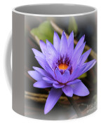 One Purple Water Lily With Vignette Coffee Mug