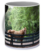 One Very Pretty Hilton Head Island Horse Coffee Mug