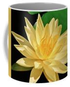 One Water Lily  Coffee Mug