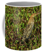 Onore Fascie Tigrisoma Fasciatum Coffee Mug