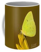 Orange Barred Sulfur Butterfly Coffee Mug