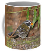 Orange-billed Sparrow Coffee Mug