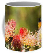 Orange-breasted Sunbird Coffee Mug