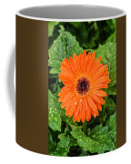 Orange Gerber Daisy 2 Coffee Mug