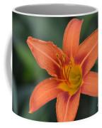 Orange Lily Photo 6 Coffee Mug