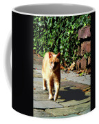 Orange Tabby Taking A Walk Coffee Mug