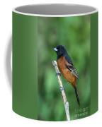 Orchard Oriole Icterus Spurius Adult Coffee Mug