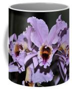 Orchid Cattleya Percivaliana Christmas Cattleya Coffee Mug