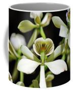 Orchid Encyclia Fragrans Coffee Mug