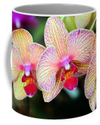 Orchid Trio Coffee Mug