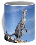 Oriental Cat Coffee Mug