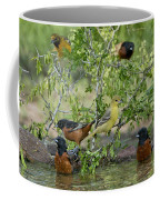 Orioles At The Pool Coffee Mug