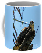 Osprey 1 Coffee Mug