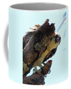 Osprey 3 Coffee Mug