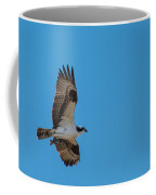 Osprey Flying Home With Dinner Coffee Mug by Robert Bales