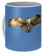 Osprey Hovering Coffee Mug