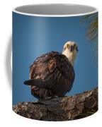 Osprey In Pine 3 Coffee Mug