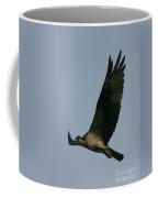 Osprey Reach  Coffee Mug