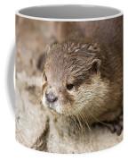 Otter Closeup Coffee Mug