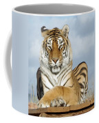 Out Of Africa Tiger 3 Coffee Mug