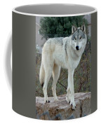 Out Of Africa Wolf  Coffee Mug