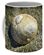 Owl Limpet Coffee Mug