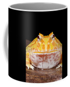 Pac Man Frog Ceratophrys On A Rock Coffee Mug