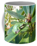 Pacific Chorus Frog On A Rhodo  Coffee Mug