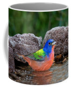Painted Bunting Passerina Ciris In Water Coffee Mug