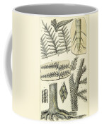 Paleozoic Flora, Calamites, Illustration Coffee Mug