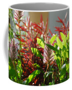 Pam's Garden 10827 Coffee Mug