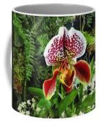 Paph Fiordland Sunset Orchid Coffee Mug